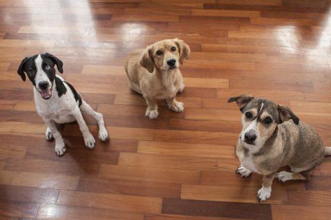 Mascotas en una oficina de comunicación: ¿Por qué elegimos ser pet friendly?